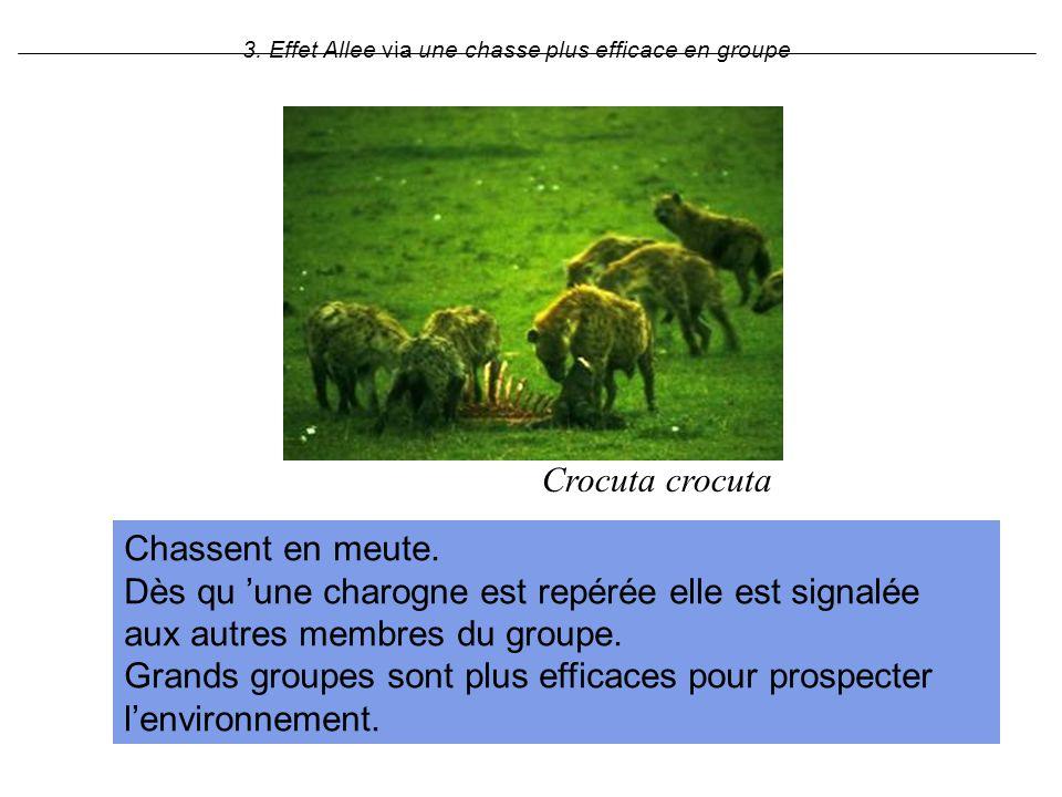 3. Effet Allee via une chasse plus efficace en groupe