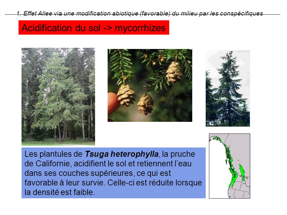 Acidification du sol -> mycorrhizes