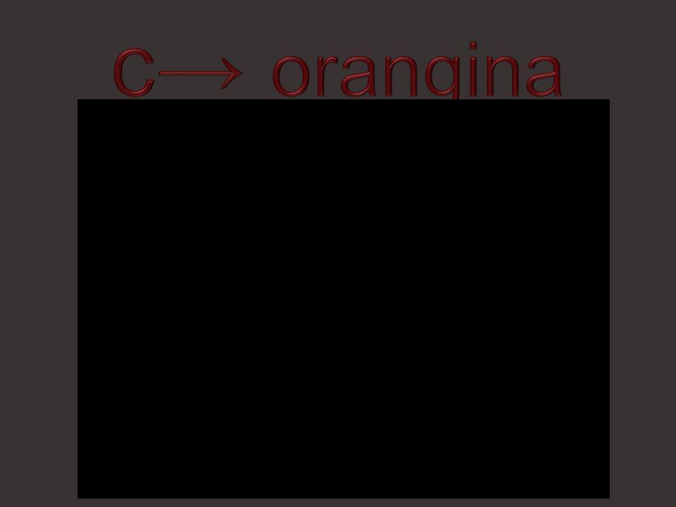 c→ orangina