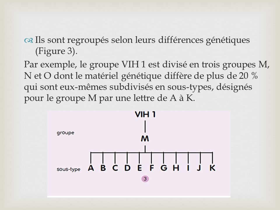Ils sont regroupés selon leurs différences génétiques (Figure 3).