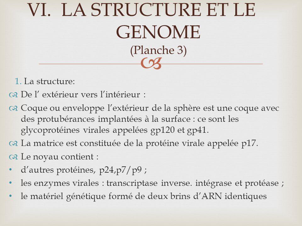 LA STRUCTURE ET LE GENOME (Planche 3)