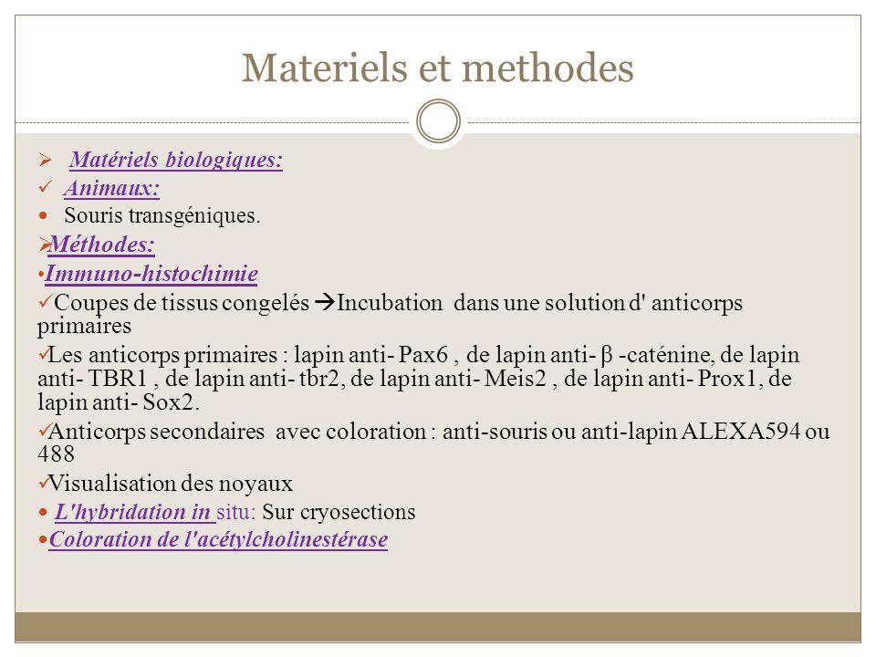 Materiels et methodes Méthodes: Immuno-histochimie