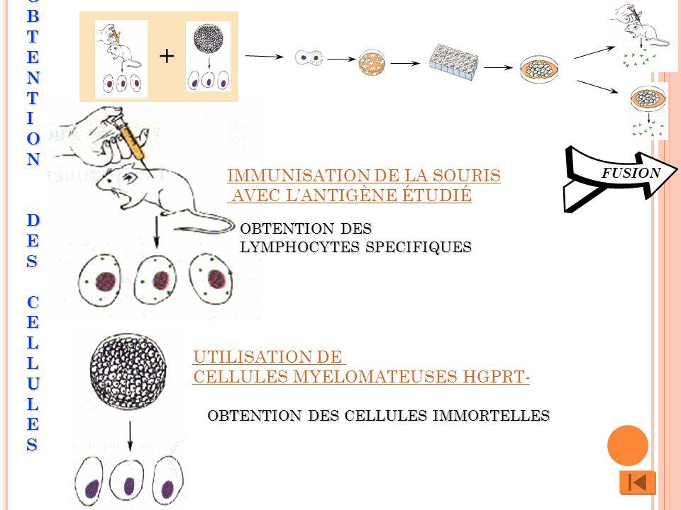 OBTENTION DES CELLULES
