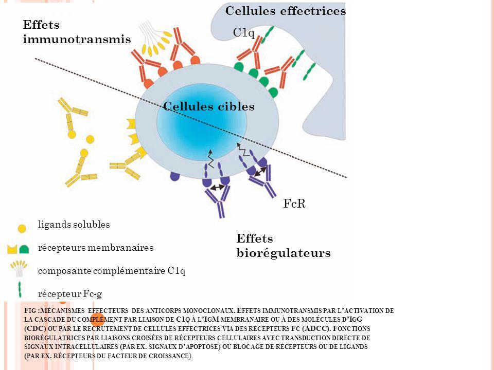 Cellules effectrices Effets immunotransmis C1q Cellules cibles FcR