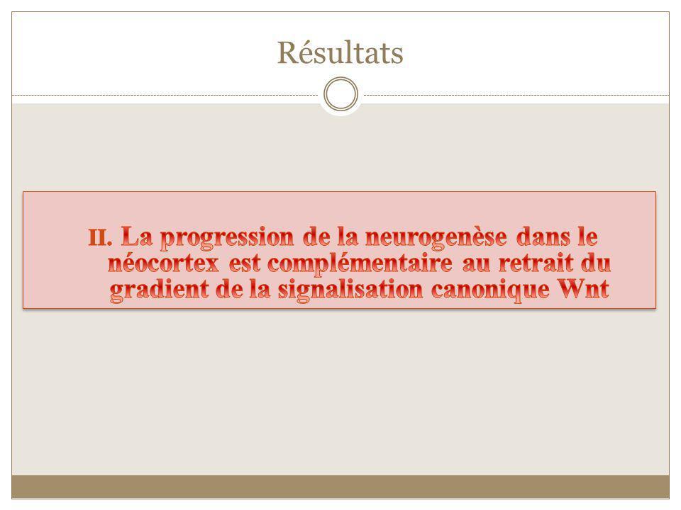 Résultats La progression de la neurogenèse dans le néocortex est complémentaire au retrait du gradient de la signalisation canonique Wnt.