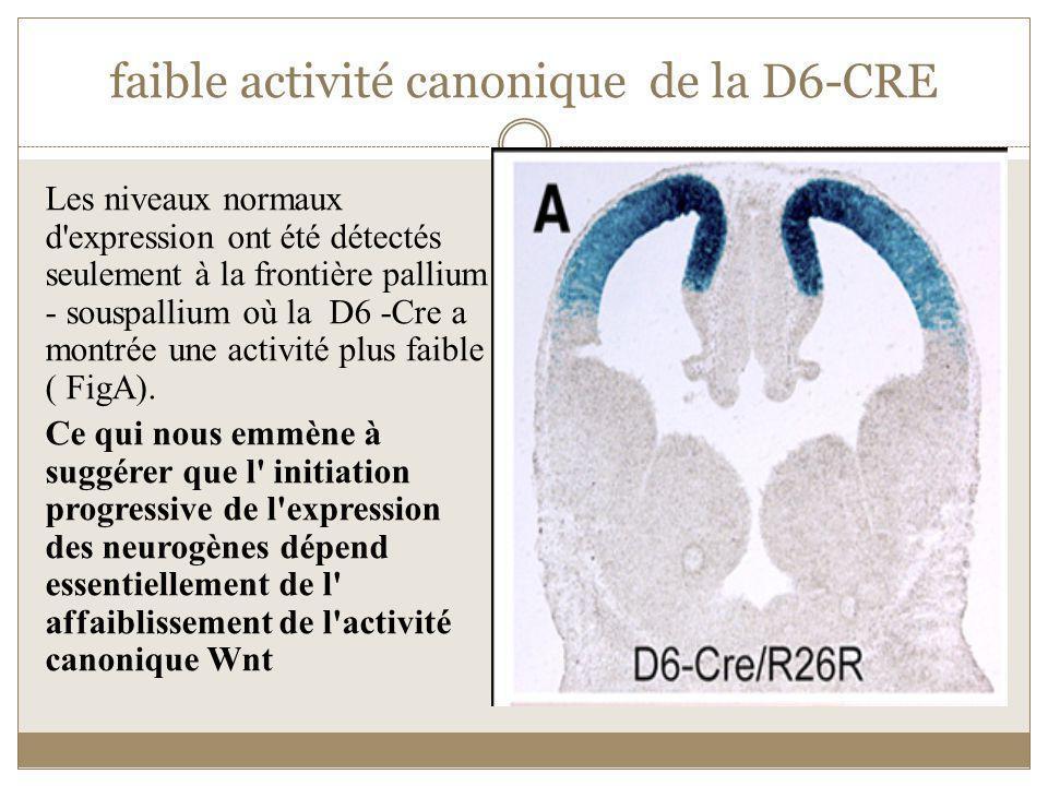 faible activité canonique de la D6-CRE
