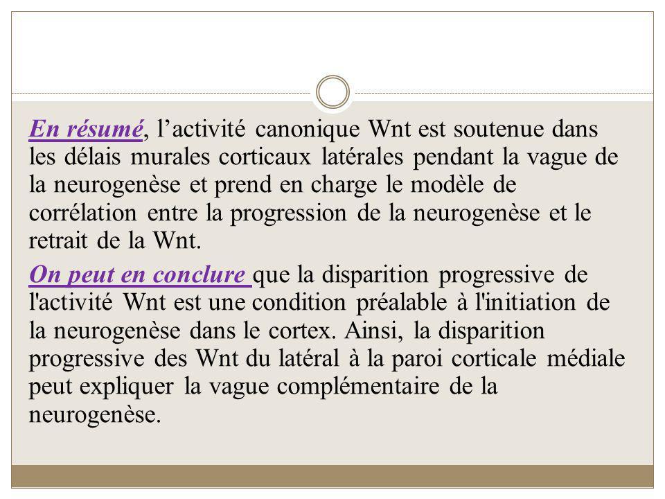 En résumé, l'activité canonique Wnt est soutenue dans les délais murales corticaux latérales pendant la vague de la neurogenèse et prend en charge le modèle de corrélation entre la progression de la neurogenèse et le retrait de la Wnt.