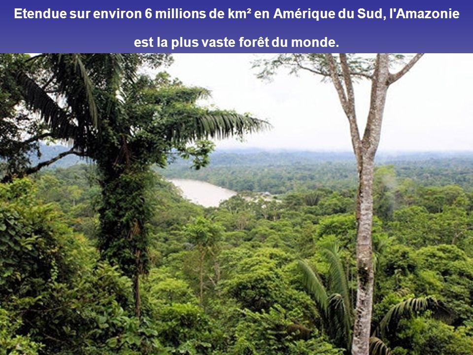 Etendue sur environ 6 millions de km² en Amérique du Sud, l Amazonie est la plus vaste forêt du monde.