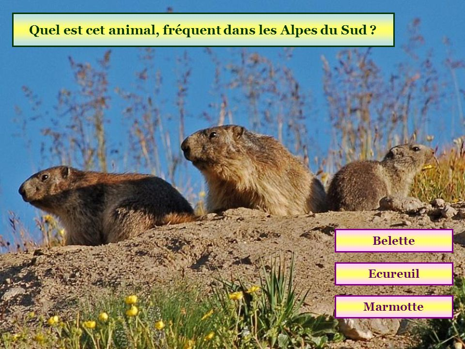 Quel est cet animal, fréquent dans les Alpes du Sud