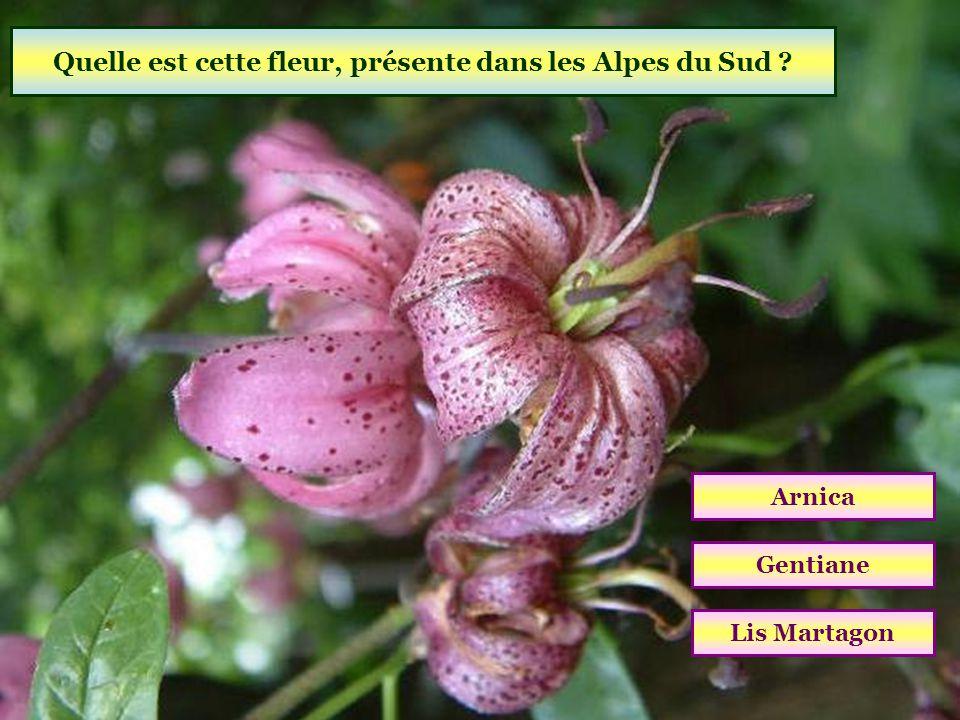 Quelle est cette fleur, présente dans les Alpes du Sud
