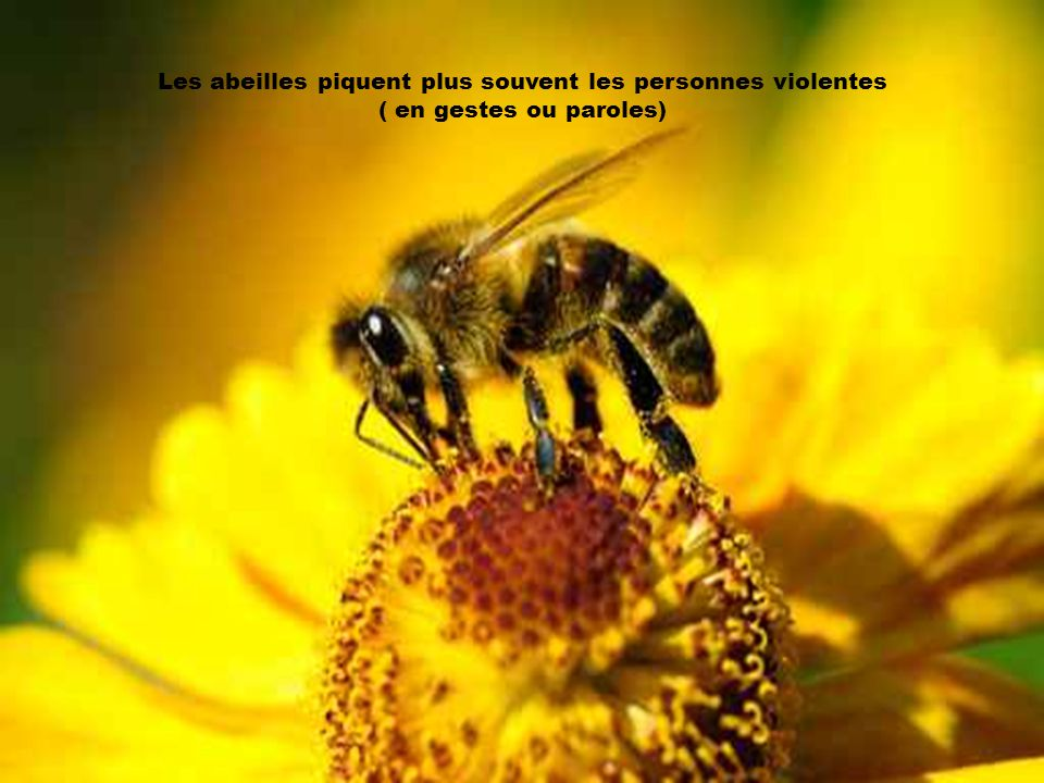 Les abeilles piquent plus souvent les personnes violentes
