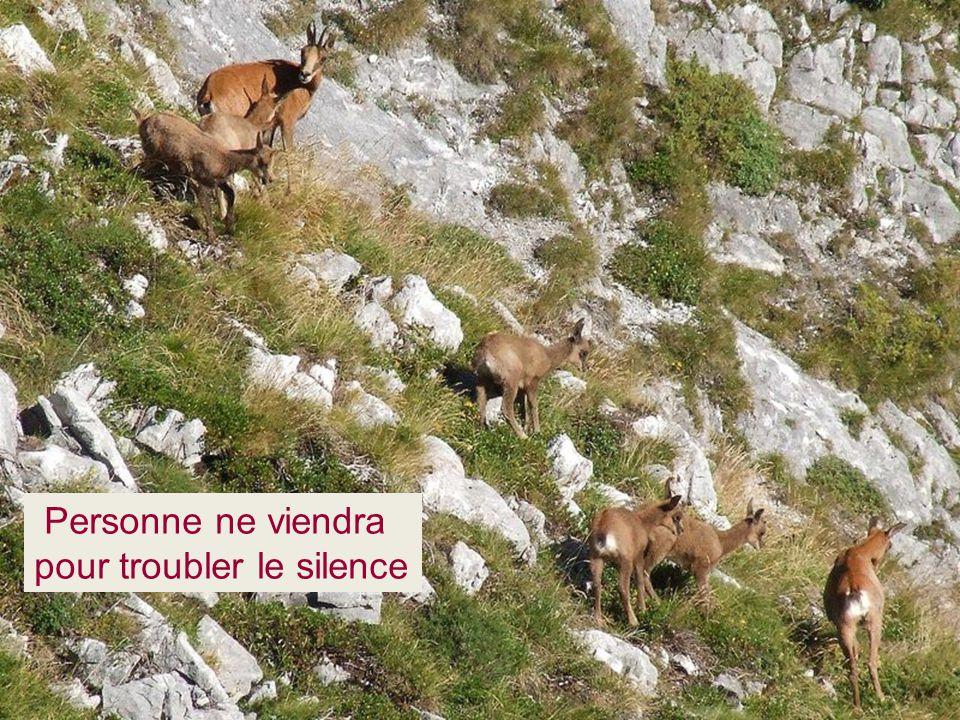 Personne ne viendra pour troubler le silence
