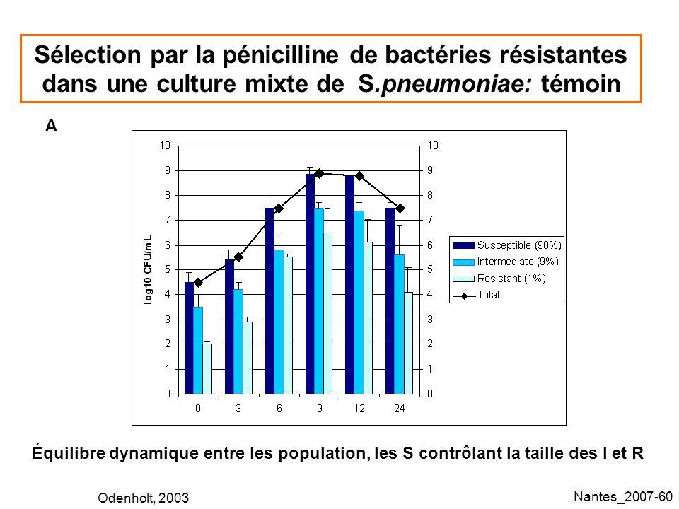 Sélection par la pénicilline de bactéries résistantes dans une culture mixte de S.pneumoniae: témoin