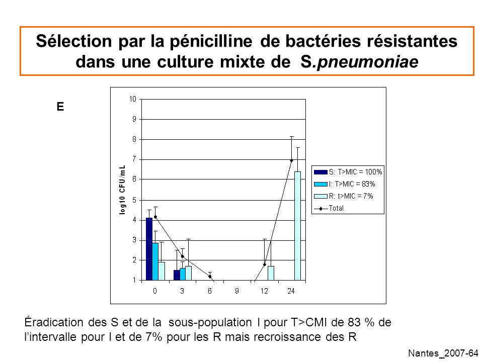 Sélection par la pénicilline de bactéries résistantes dans une culture mixte de S.pneumoniae
