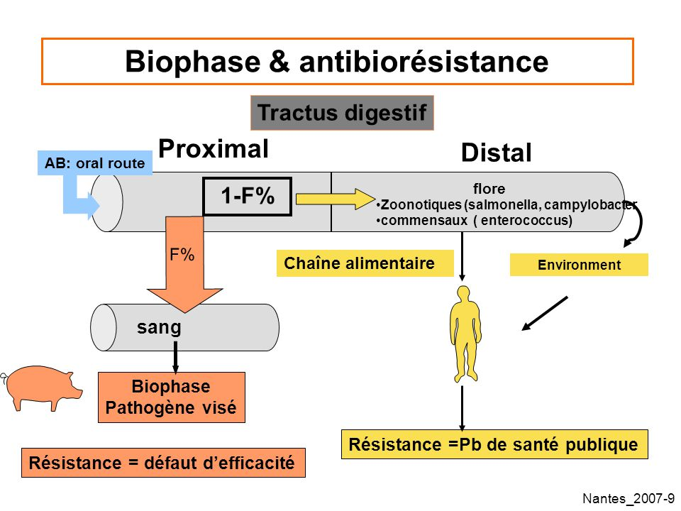 Biophase & antibiorésistance
