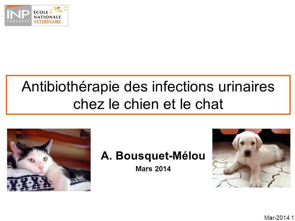 Antibiothérapie des infections urinaires chez le chien et le chat
