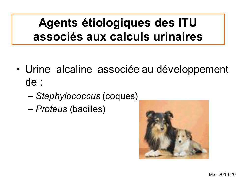 Agents étiologiques des ITU associés aux calculs urinaires
