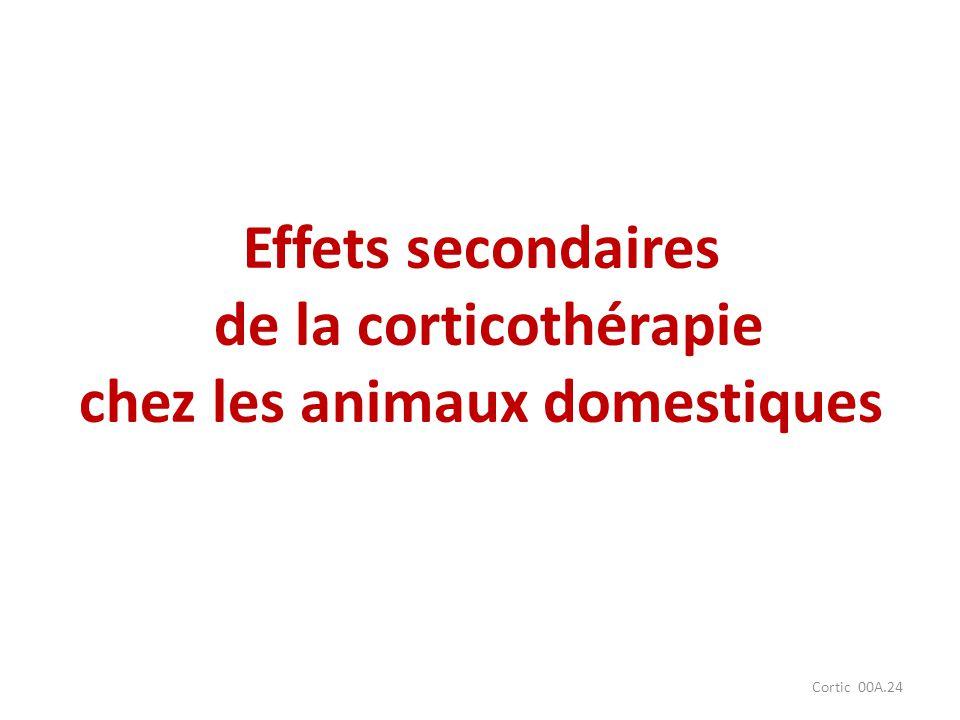 Effets secondaires de la corticothérapie chez les animaux domestiques