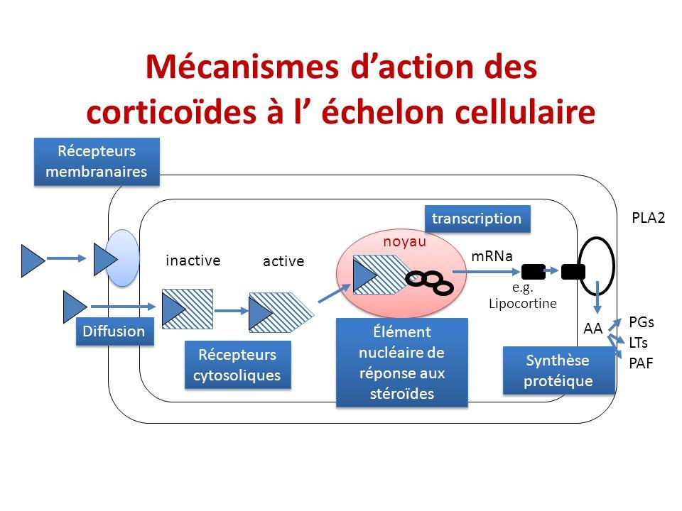 Mécanismes d'action des corticoïdes à l' échelon cellulaire
