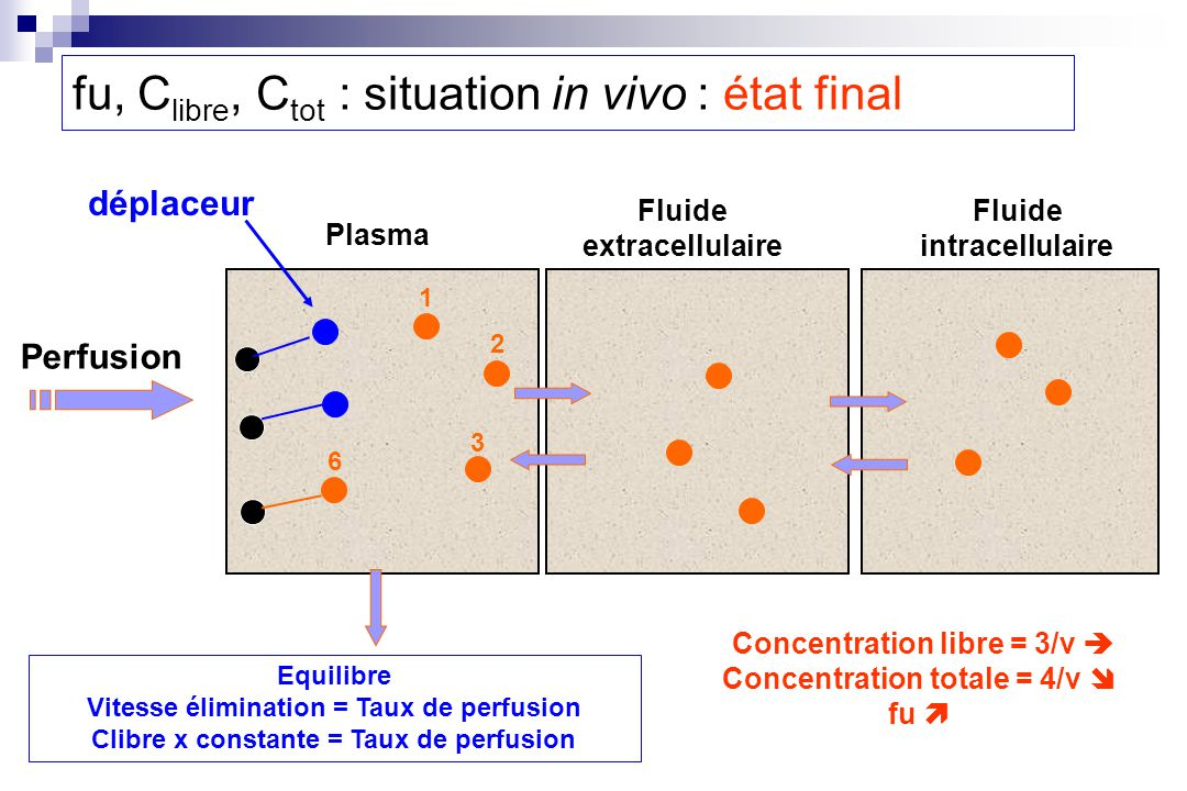 fu, Clibre, Ctot : situation in vivo : état final