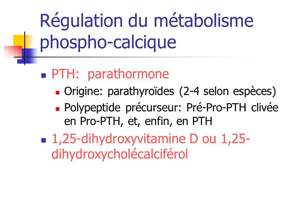 Régulation du métabolisme phospho-calcique