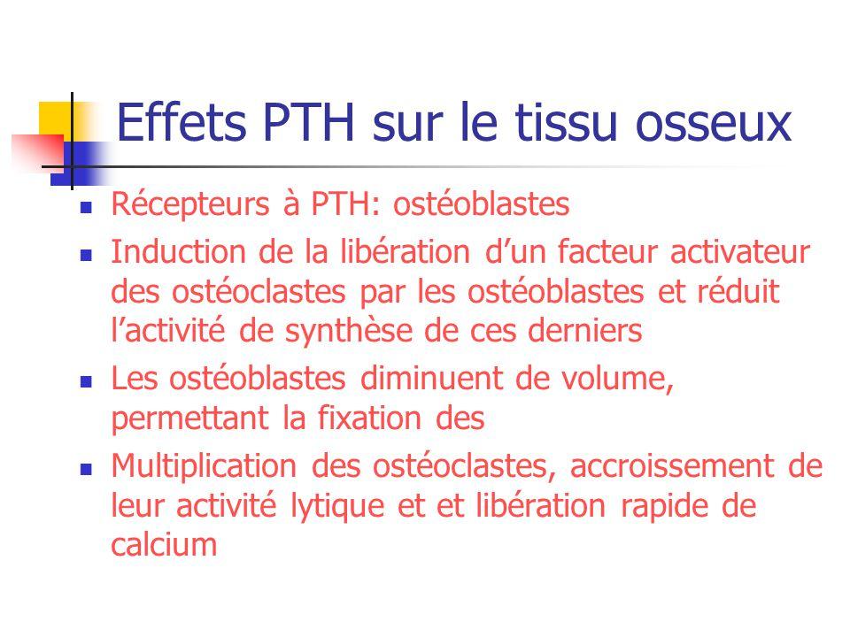 Effets PTH sur le tissu osseux