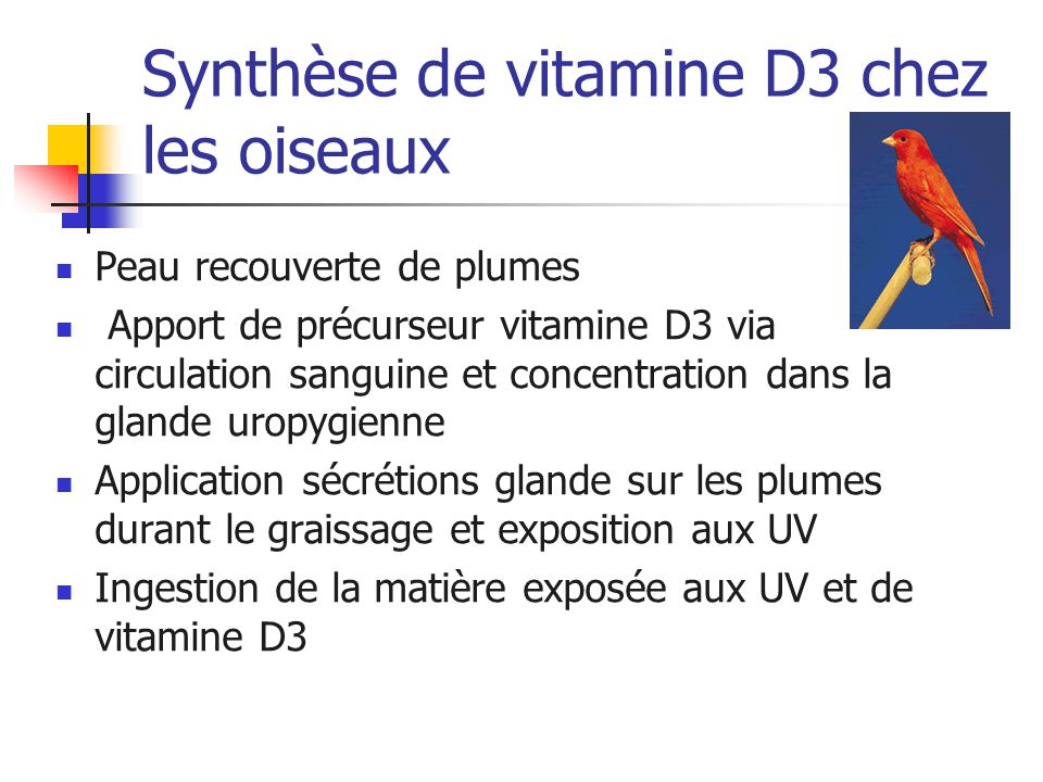 Synthèse de vitamine D3 chez les oiseaux