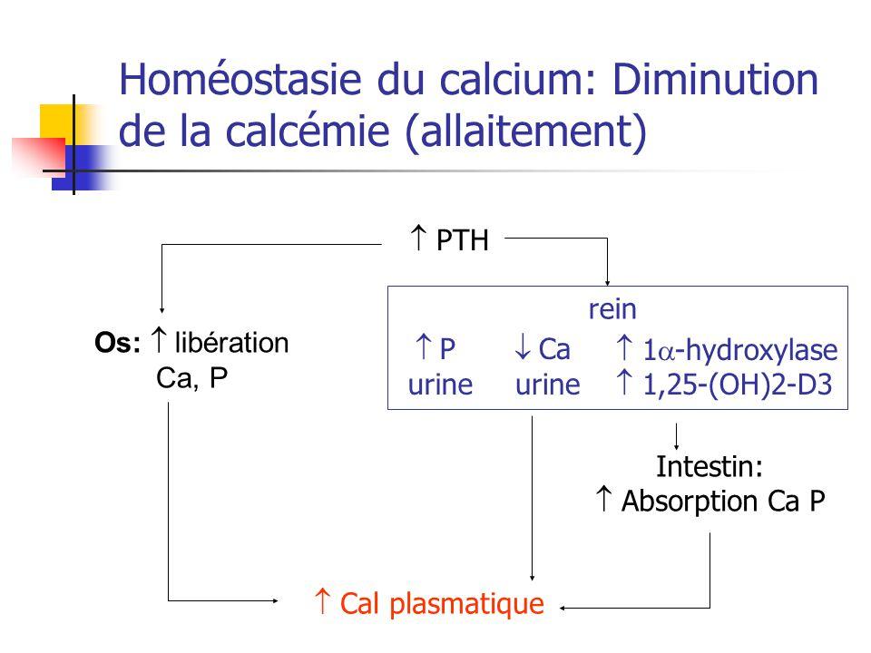 Homéostasie du calcium: Diminution de la calcémie (allaitement)