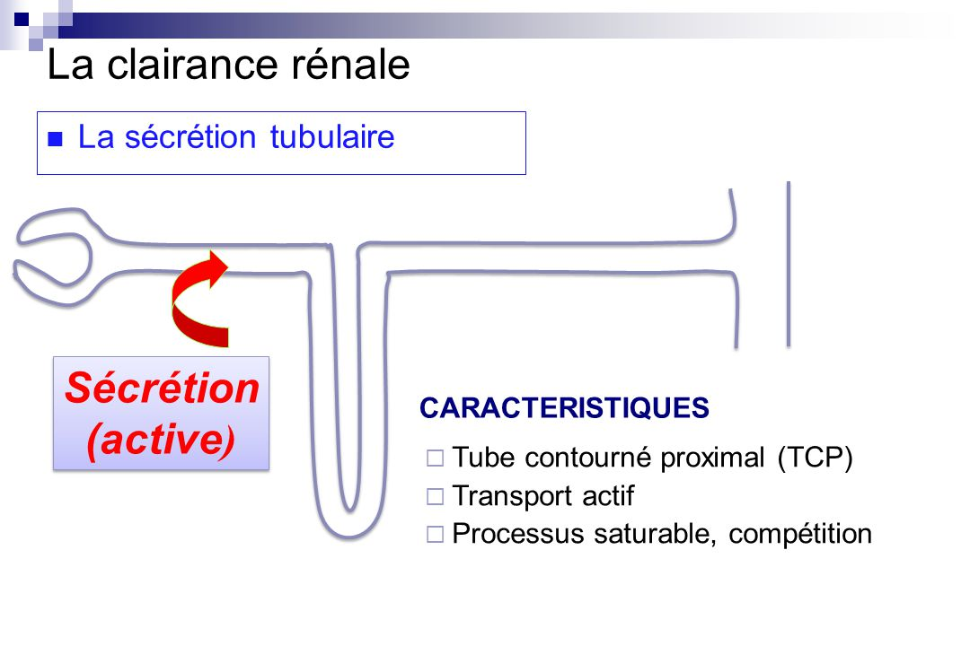 La clairance rénale Sécrétion (active) La sécrétion tubulaire