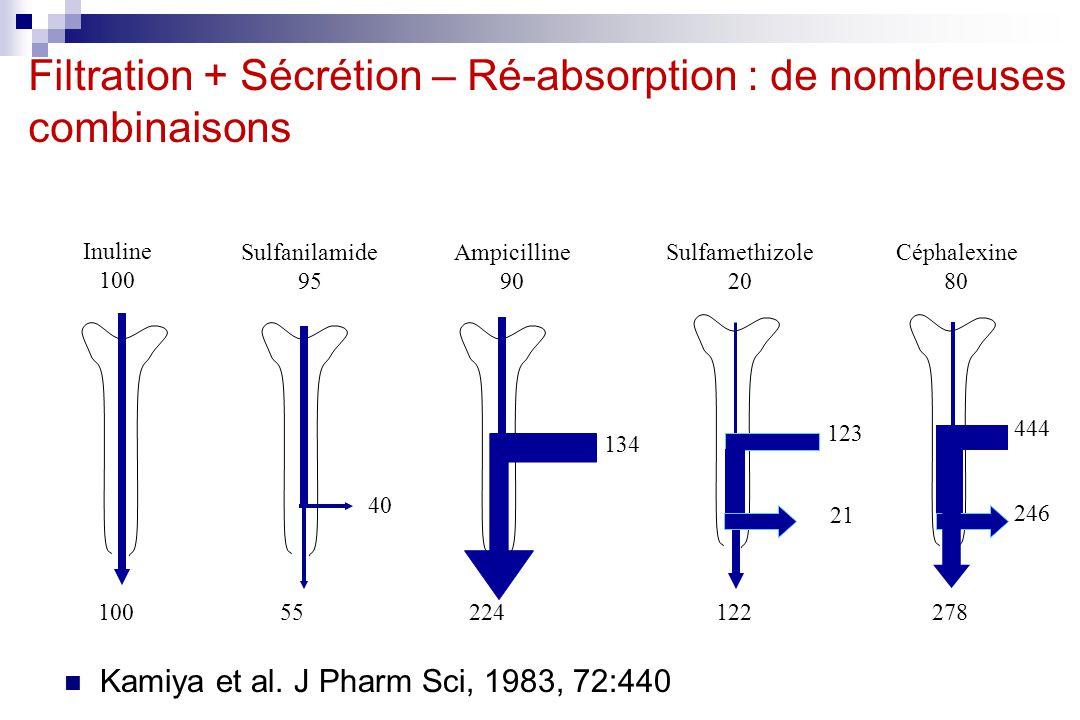 Filtration + Sécrétion – Ré-absorption : de nombreuses combinaisons