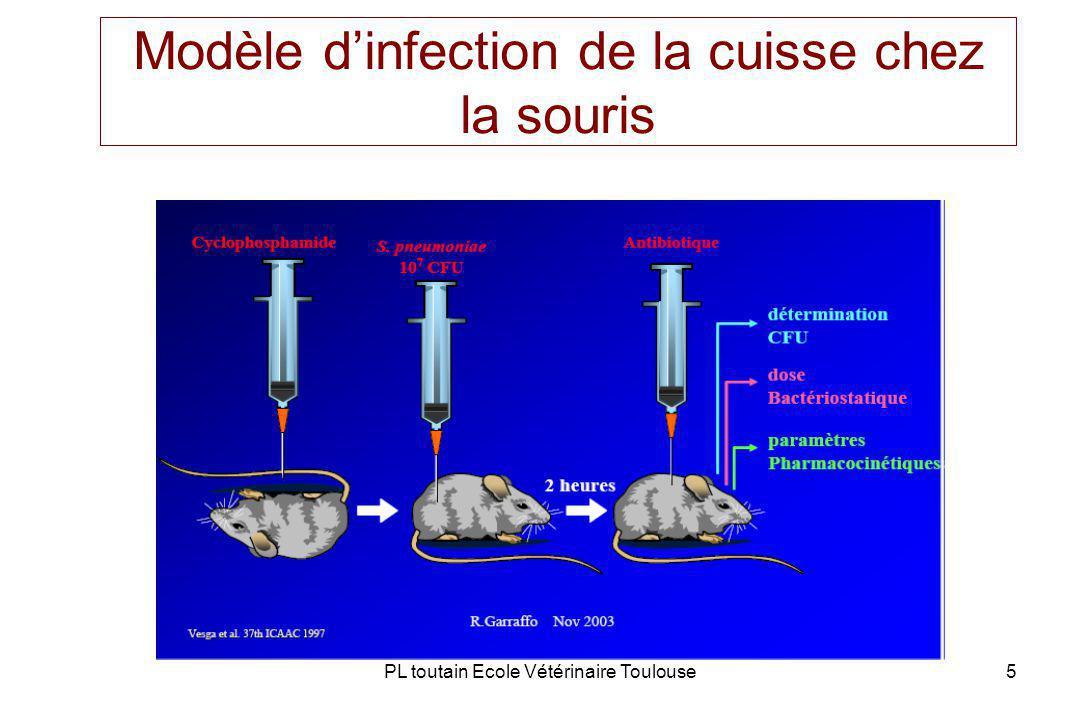 Modèle d'infection de la cuisse chez la souris