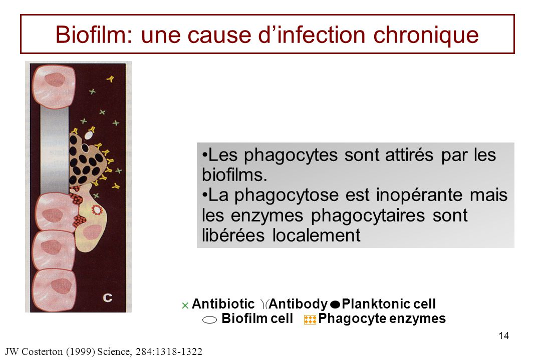 Biofilm: une cause d'infection chronique