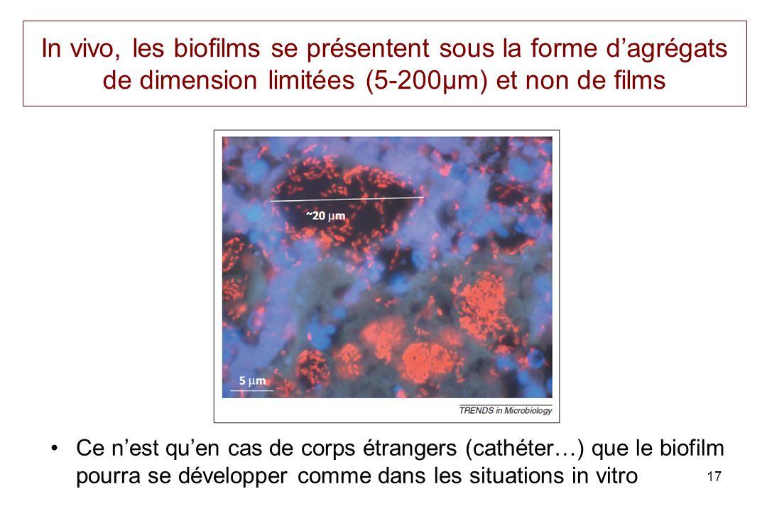 In vivo, les biofilms se présentent sous la forme d'agrégats de dimension limitées (5-200µm) et non de films
