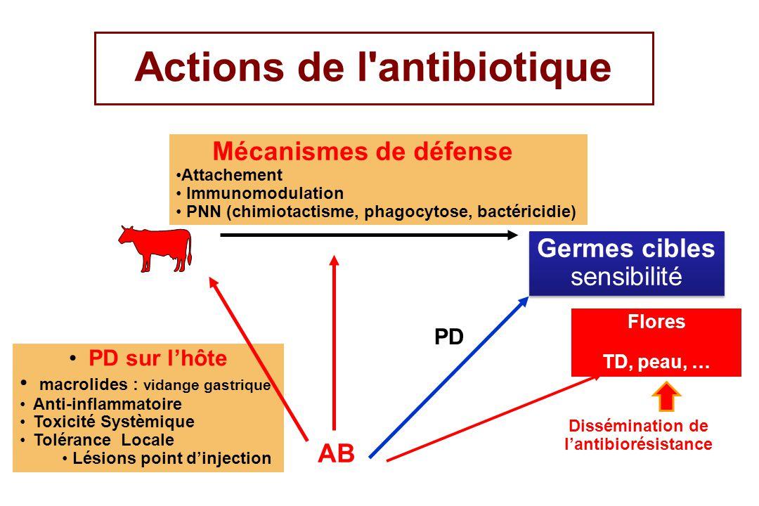Actions de l antibiotique Dissémination de l'antibiorésistance