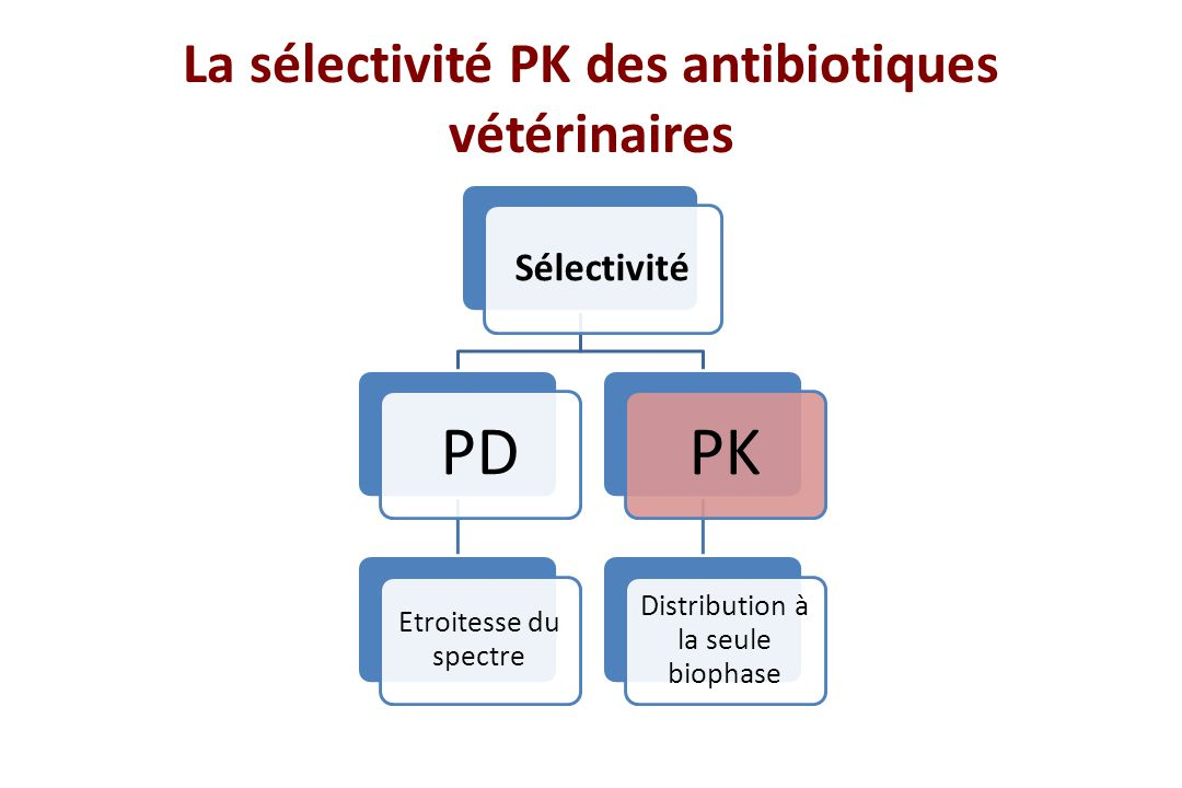 La sélectivité PK des antibiotiques vétérinaires