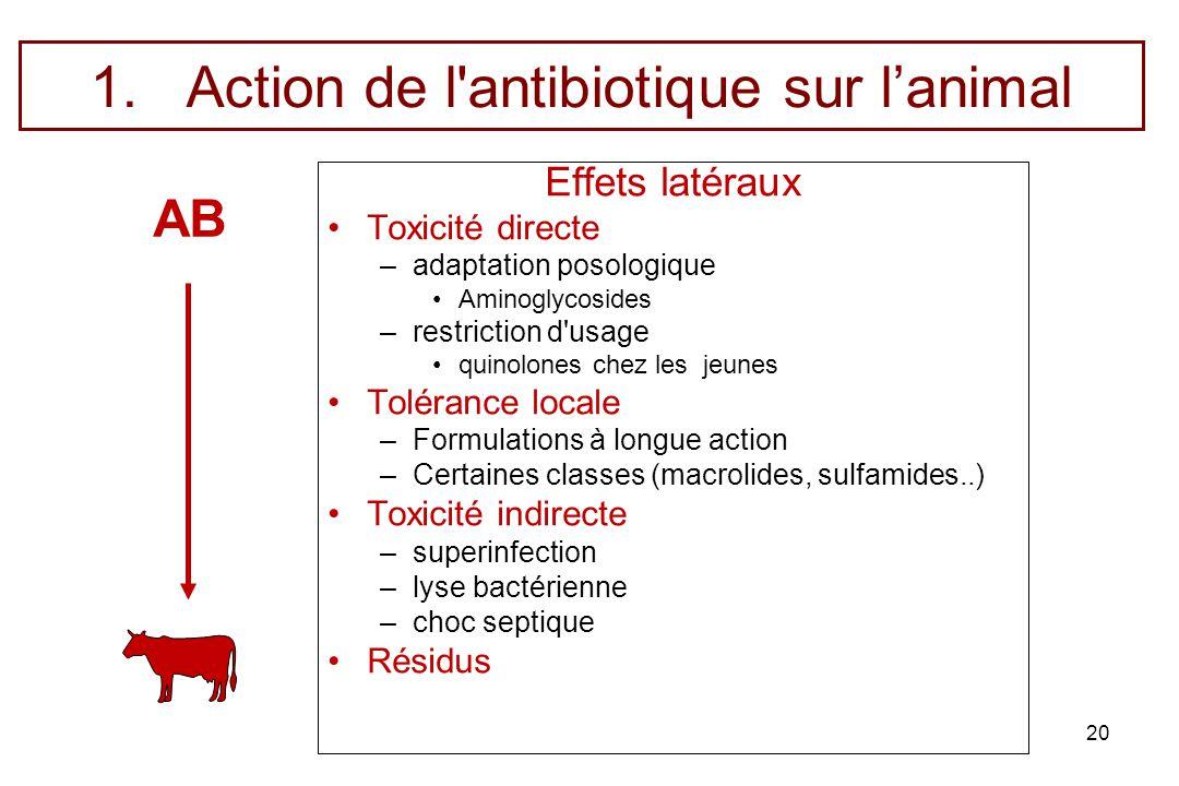 Action de l antibiotique sur l'animal