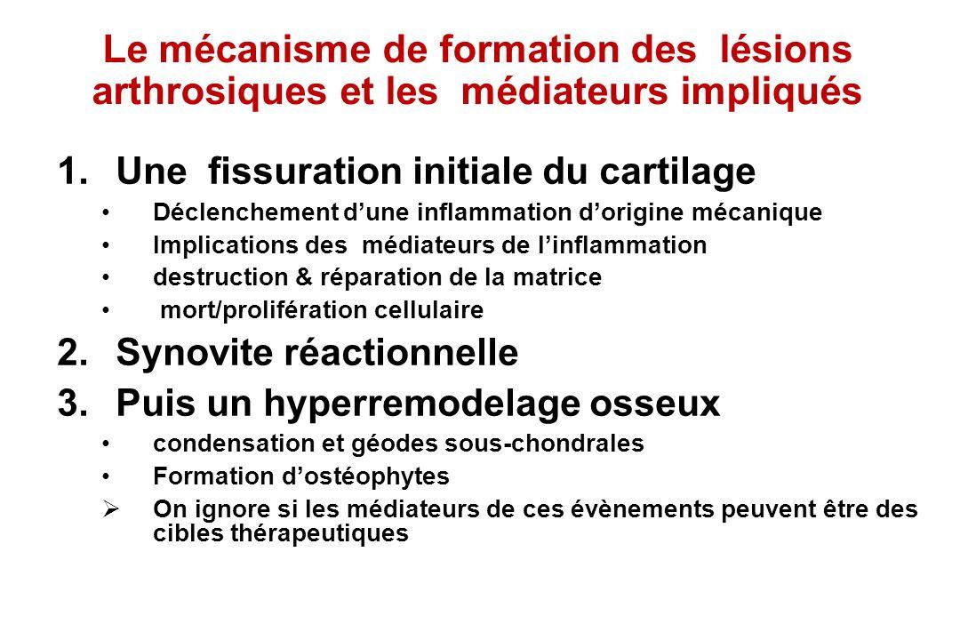 Le mécanisme de formation des lésions arthrosiques et les médiateurs impliqués