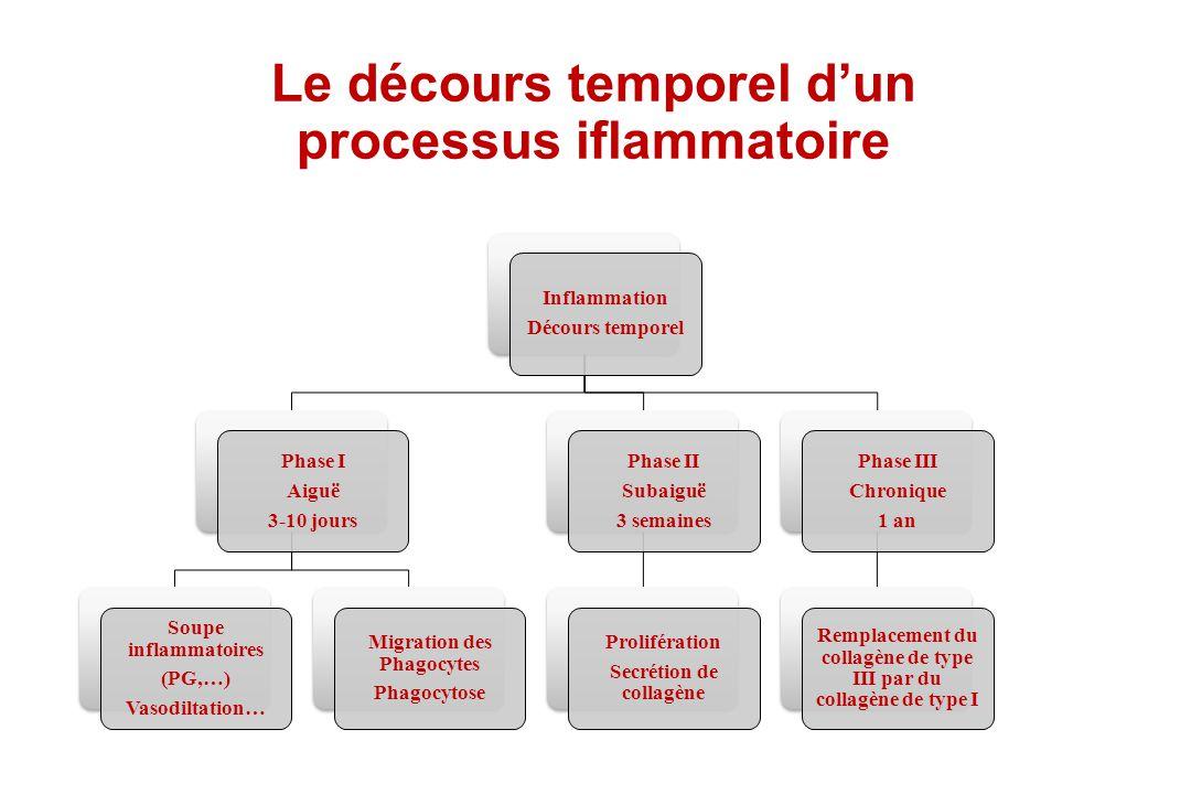 Le décours temporel d'un processus iflammatoire