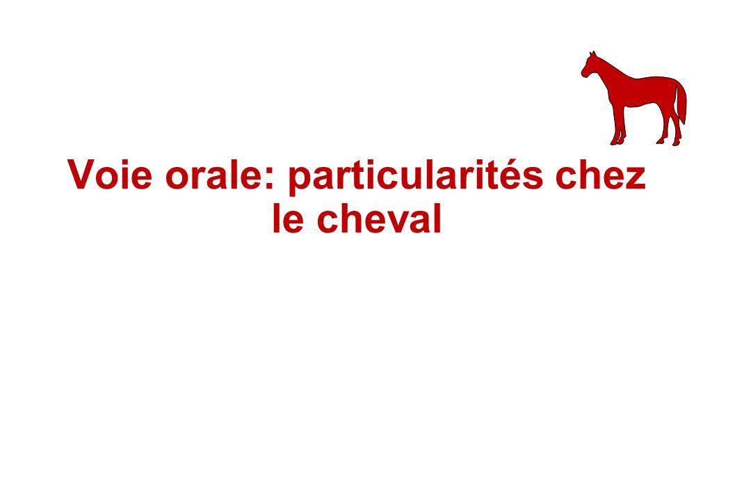 Voie orale: particularités chez le cheval