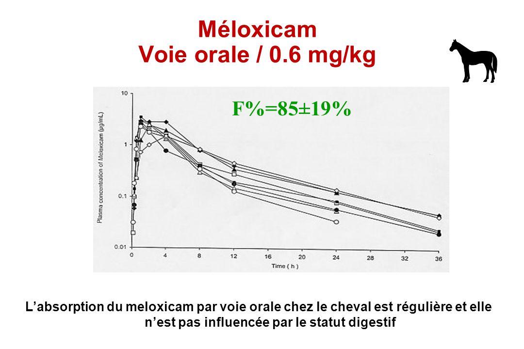 Méloxicam Voie orale / 0.6 mg/kg