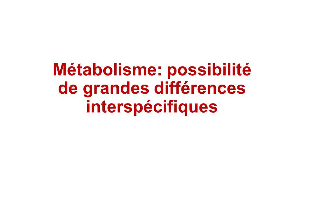 Métabolisme: possibilité de grandes différences interspécifiques