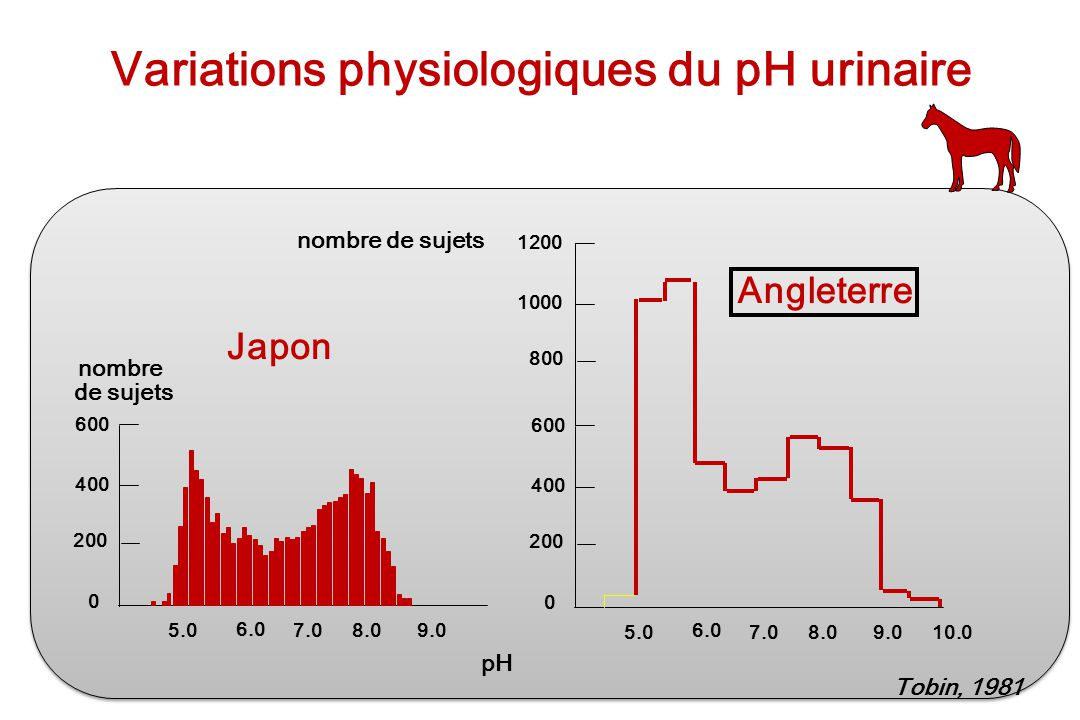 Variations physiologiques du pH urinaire
