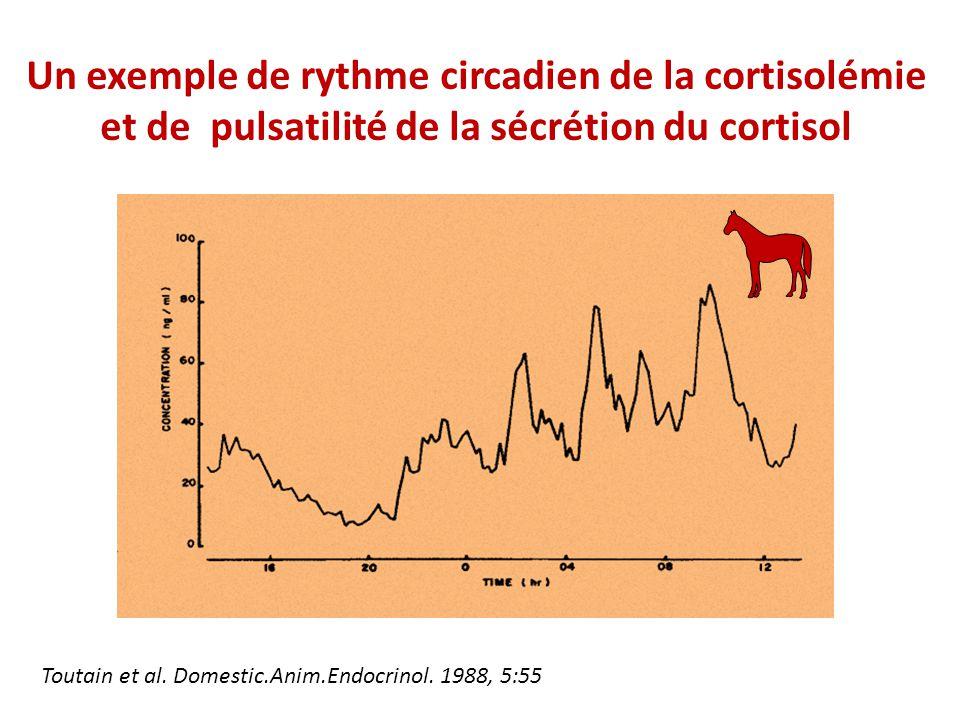 Un exemple de rythme circadien de la cortisolémie et de pulsatilité de la sécrétion du cortisol