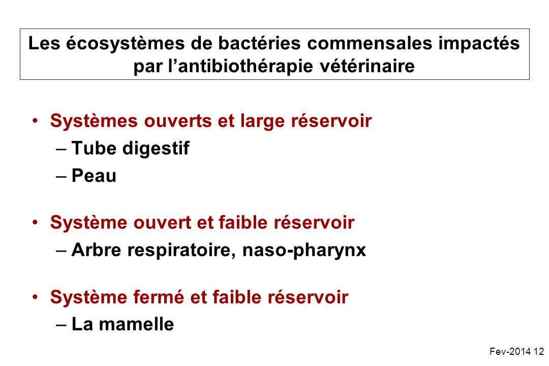 Les écosystèmes de bactéries commensales impactés par l'antibiothérapie vétérinaire