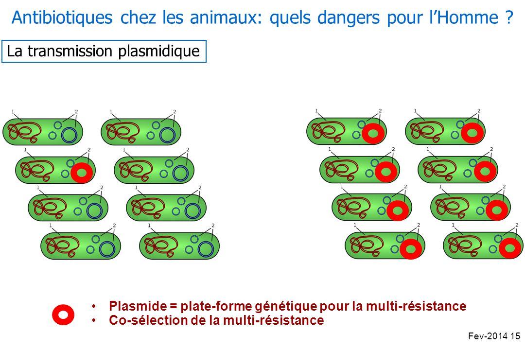 Antibiotiques chez les animaux: quels dangers pour l'Homme
