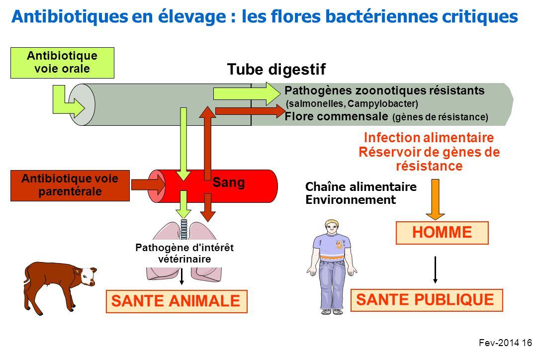 Antibiotiques en élevage : les flores bactériennes critiques
