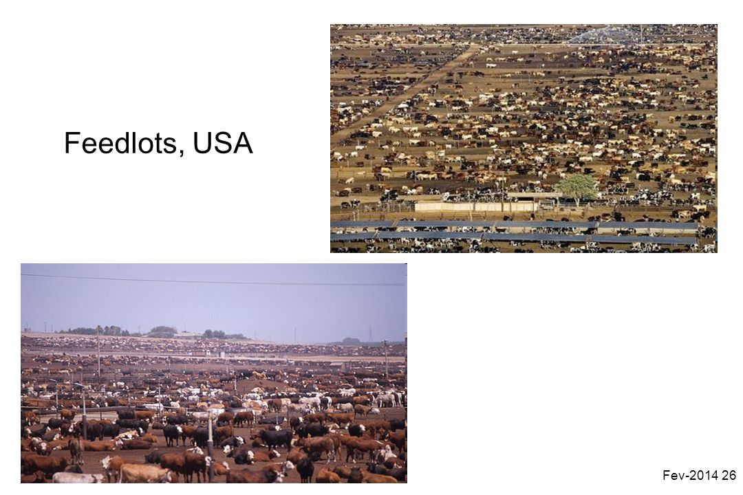 Feedlots, USA