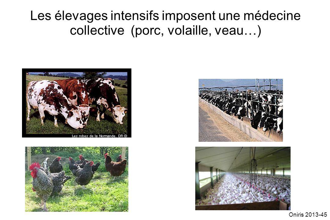 Les élevages intensifs imposent une médecine collective (porc, volaille, veau…)