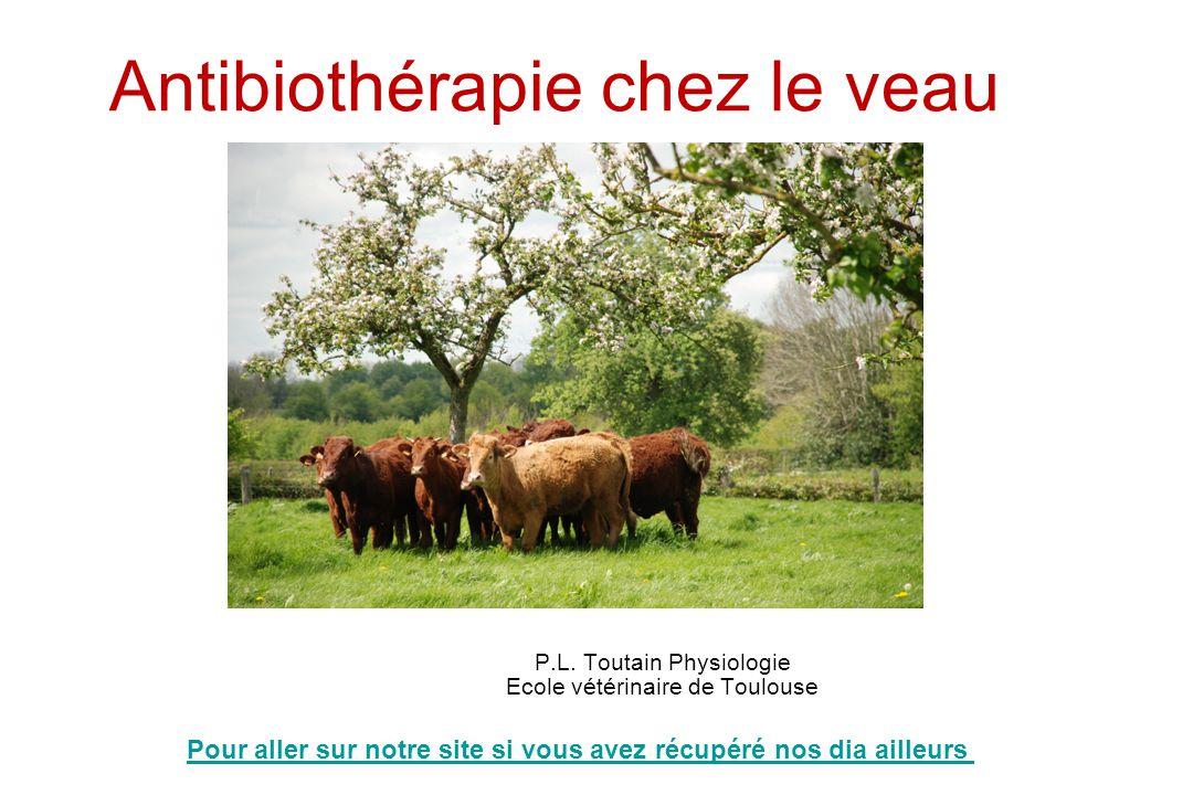 Antibiothérapie chez le veau