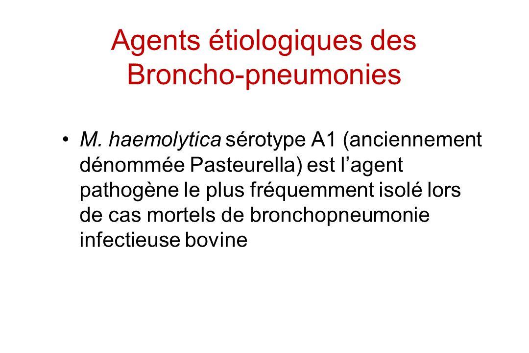 Agents étiologiques des Broncho-pneumonies